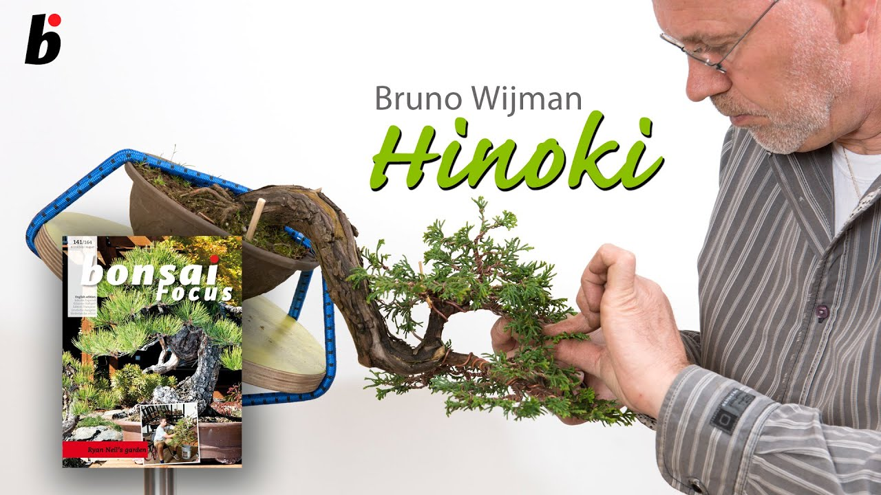 Step By With Hinoki Cypress Chamaecyparis Obtusa Youtube Bonsai Wiring Demo Focus