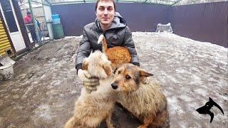 Собаки и кошки в приюте. Майский день Иваново. Волонтеры