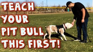 Teach Your Pit bull this first! (obedience Training)