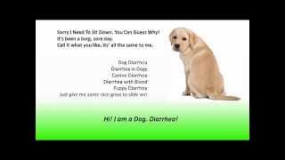 Dog Diarrhea | Diarrhea In Dogs | Explosive Diarrhea Help Is Here!