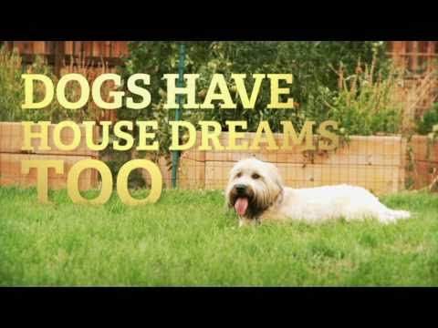 Metro Brokers Commercial - Dog House Dream