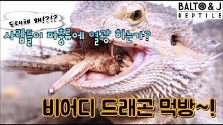 도대체 왜!? 사람들은 파충류에 열광하는가!!  fea…