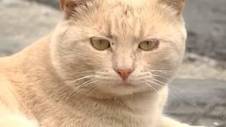 2017-07-26 г. Брест. Анонс открытия центра помощи бездомным животным. Новости на Буг-ТВ.