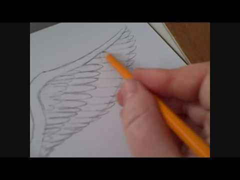 How To Draw An Angels Wing Video Youtube