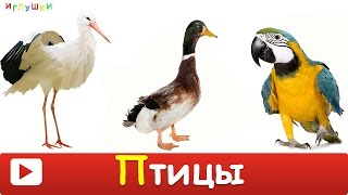 [ ПТИЦЫ для ДЕТЕЙ 1 часть ] с ГОЛОСАМИ. Развивающие ВИДЕО про птиц для детей в HD(В этом видео ваш малыш познакомиться с птицами такими как: павлин, цапля, пеликан, фламинго, аист, утка, лебед..., 2016-03-04T16:41:56.000Z)