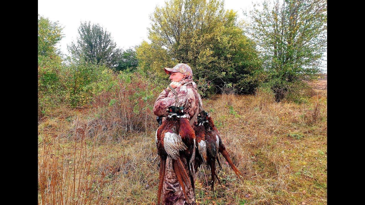 Чумовое открытие охоты на фазана 2019, часть 1,  pheasant hunting