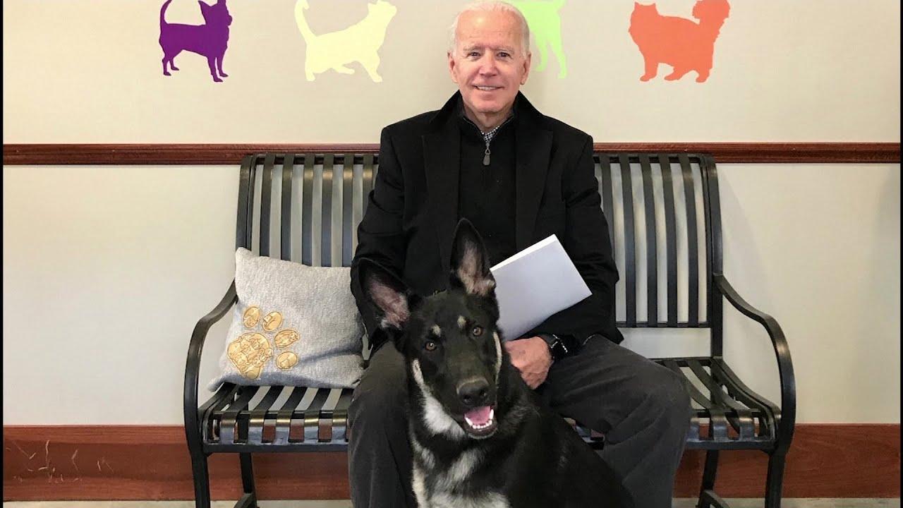 شاهد:-تنصيب- افتراضي لكلب بايدن احتفالاً بدخوله إلى البيت الأبيض  - نشر قبل 10 ساعة