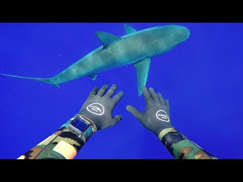 Thumbnail: Freediving with Sharks in Middle of Ocean (400FT Deep)