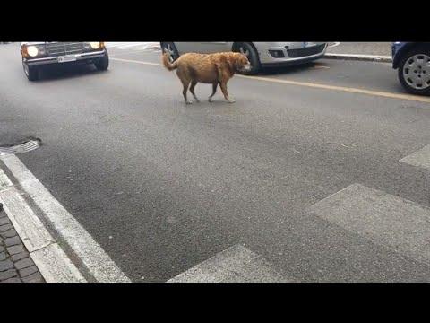 Non tutti crederanno cosa fa questo cane