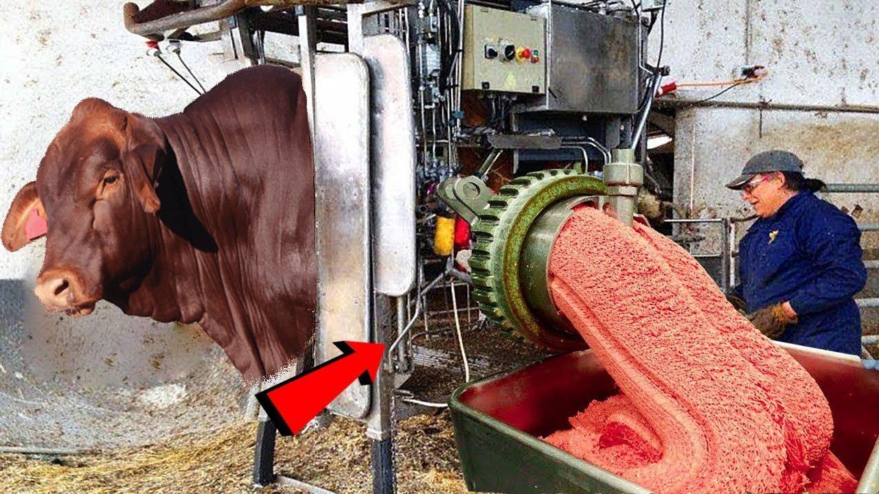 مشین چند سیکنڈز میں قیمہ گوشت چکن نگٹس کیسے بناتی | Inside Meat And Chicken Processing Factory