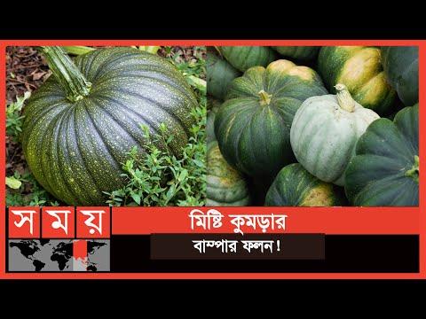 ২৫০০ একর জমিতে ফলেছে মিষ্টি কুমড়া! | Vegetable Bazar | Business News | Somoy TV
