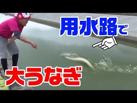 【衝撃】近所の用水路で大うなぎを釣り上げろ!