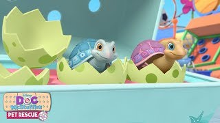 Pet Rescue: Shell You Later | Doc McStuffins | Disney Junior
