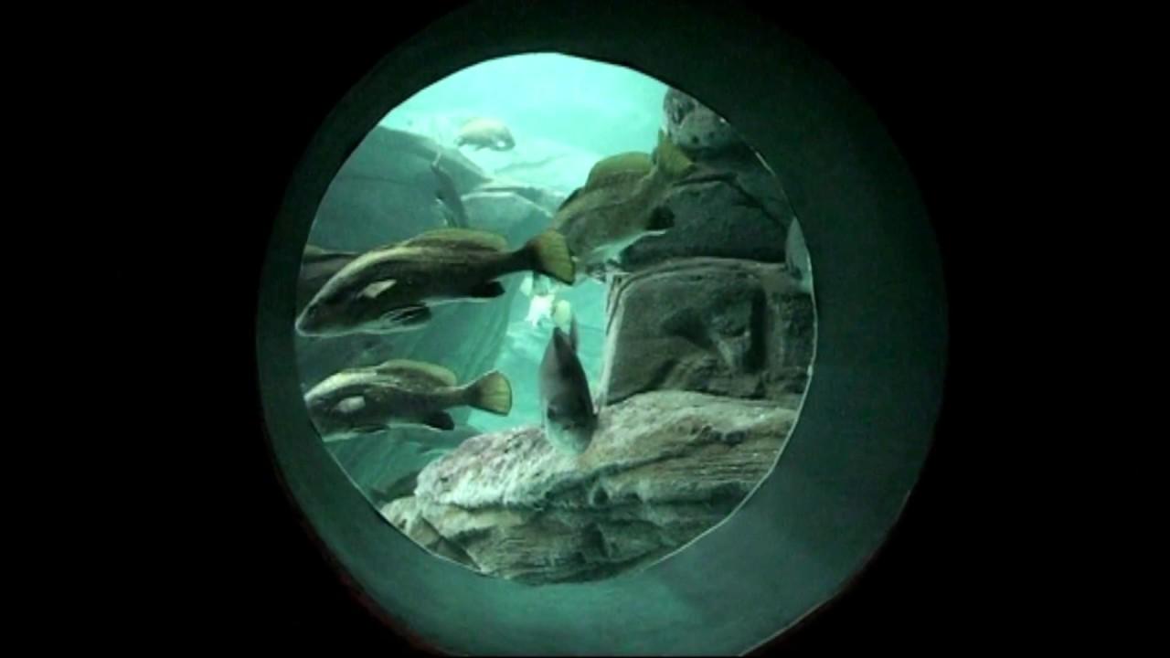 aquarium kreta