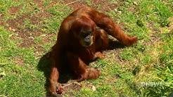 Perth Zoo's World Record | 9 News Perth