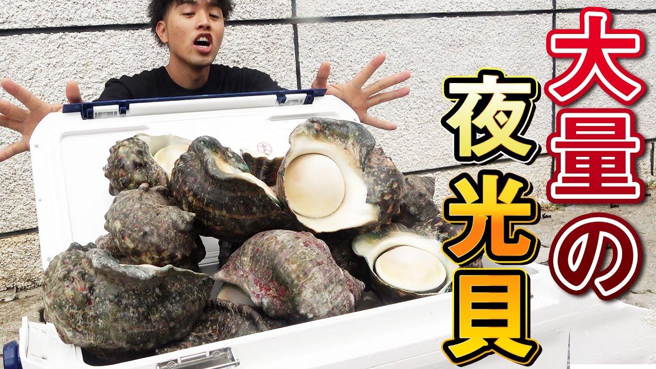 高級食材夜光貝を大量に頂いたので捌いて食べる!