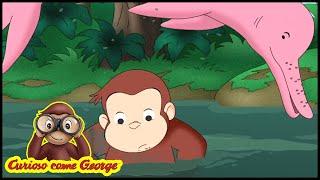 Curioso come George Avventura in Amazzonia  Cartoni Animati per Bambini George la Scimmia