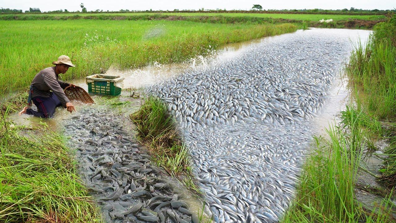 Technique Tools Catching Big Catfish Run Back Water - Amazing Fishing Videos 2021