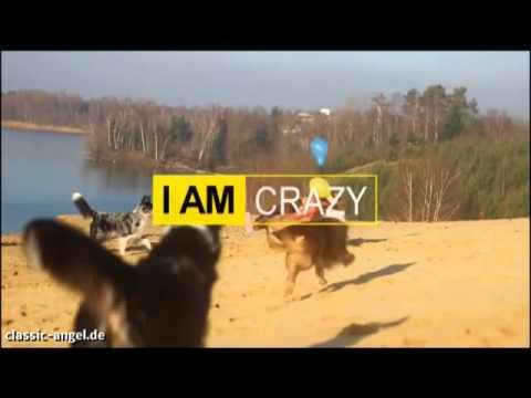 I am Australian Shepherd