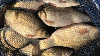 ШАЛЬНОЙ КЛЁВ КАРАСЯ НА ПЕНОПЛАСТ С ЧЕСНОКОМ Рыбалка летом на карася Рыбалка на поплавок июлем 2021