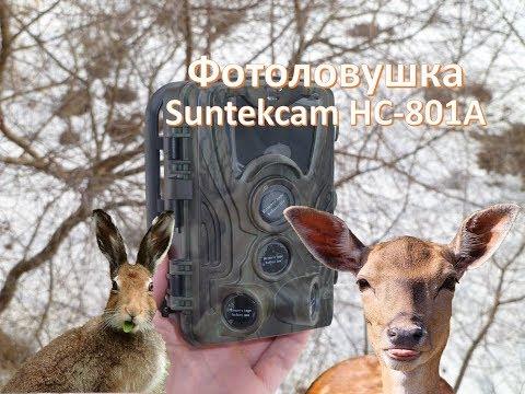 Фотоловушка(Trail Camera) Suntekcam HC-801A 1080p. ОБЗОР+ТЕСТ