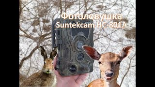 фотоловушка(Trail Camera) Suntekcam HC-801A 1080p. ОБЗОРТЕСТ
