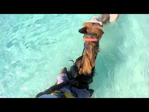 Half Moon Cay, Bahamas Horseback Ride Ocean, Carnival Cruise `what we did`