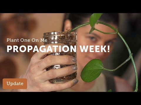 Learn How to Propagate Houseplants