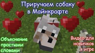 Как приручить собаку в Майнкрафте / Minecraft PE?