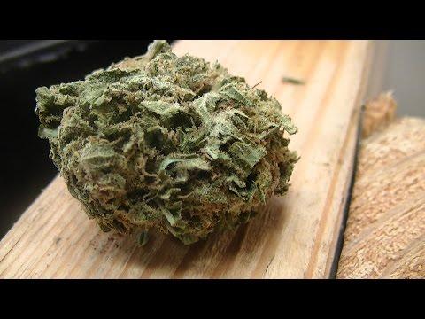 Green Ninja's Next Indoor Organic CFL Medical Marijuana Grow Part 25: Grow Room Update:  The flush