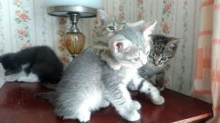 Домашние котята 1,5 месяца, в дар. ДР 25/04/2019. Москва, Митино