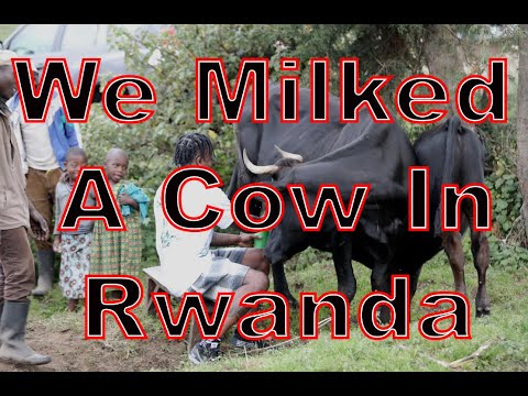 GoodwinSZN Travel: We Milked A Cow In Rwanda!!!