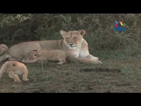 World life conservation day: Establishment of more conservancies improving conservation