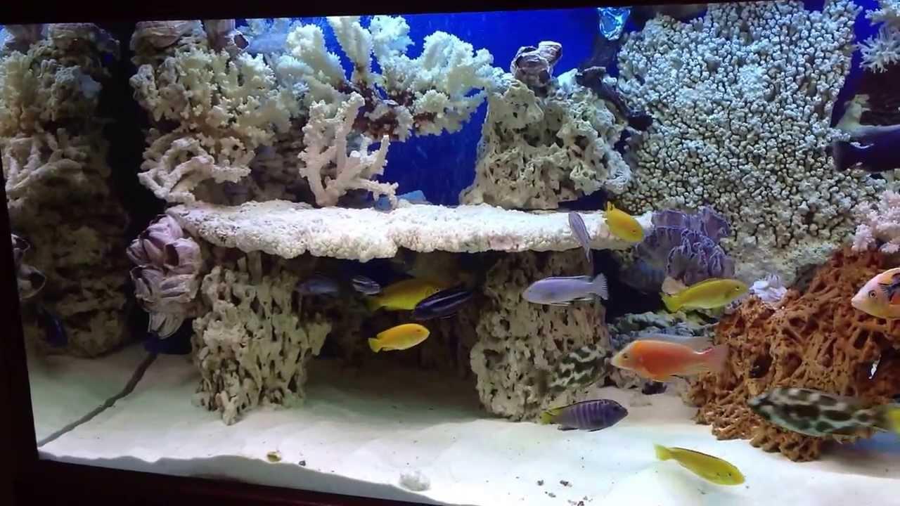 Akwarium Malawi 654 Litry Zestaw Nova Super Argus Aqua Design
