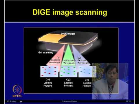 Mod-16 Lec-16 Two-dimensional difference gel electrophoresis (2D DIGE)