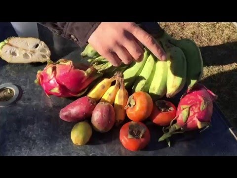How to Harvest EXOTIC FRUIT Seeds!