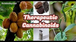 Plants That Contain Therapeutic Cannabinoids - Healing Compounds That Nourish Our EC System