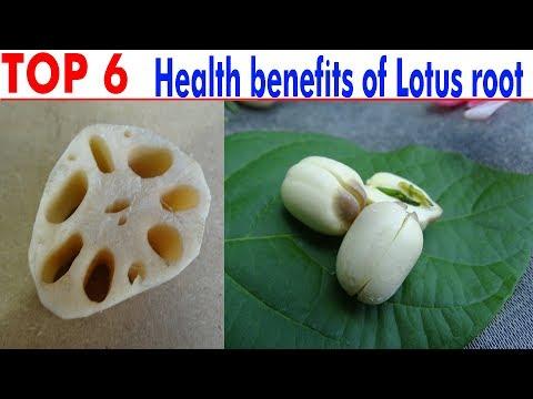 TOP 6 Health benefits of Lotus root