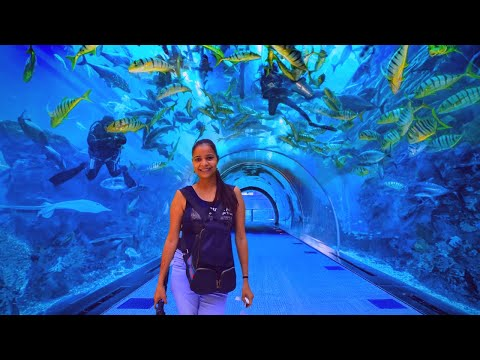 Dubai Aquarium & Underwater Zoo 2020  Shark Dive Close Encounter  The Travel Psycho Videos  