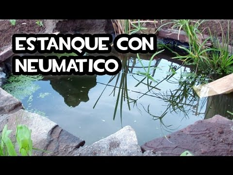 Estanque con un neum tico la evolucion youtube for Como oxigenar un estanque