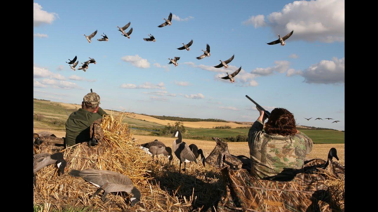 Охота на гуся в Казахстане. Аркалык.