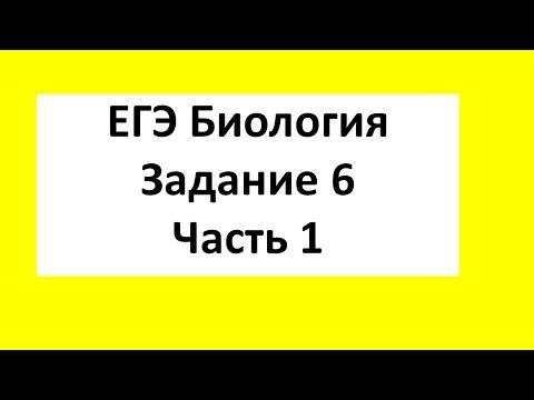 Задачи по генетике ЕГЭ Биология Задание 6 Часть 1