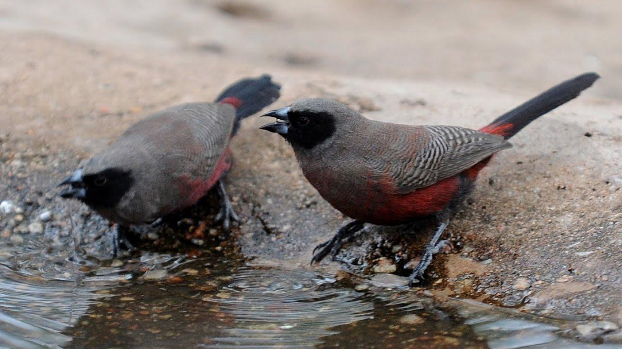 South African Wild Birds in the Stillbay area - Wildekloof ...
