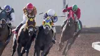 "Horse Racing Alberta - ""Benefits"""