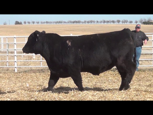 Express Ranches Lot 402