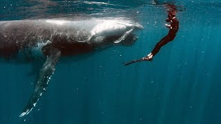 You'll Never Believe How Close They Came!!! Swimming With Giants || Humpback Whales in Tahiti