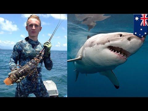 рыбак который спас белую акулу