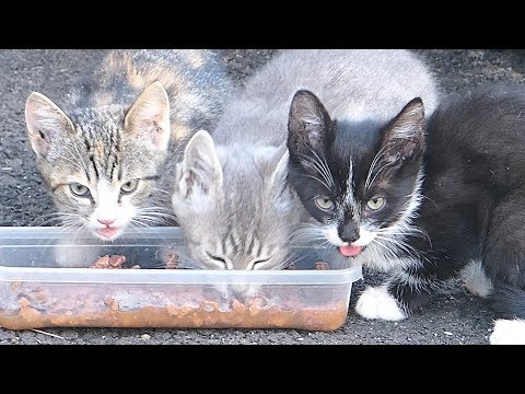 Kittens with mother, father, aunt from the basement