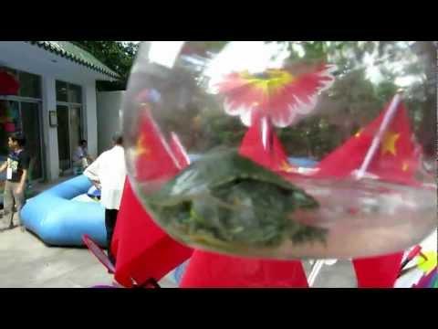 Live Turtles, 10 元 Yuen in 深圳 Shenzhen