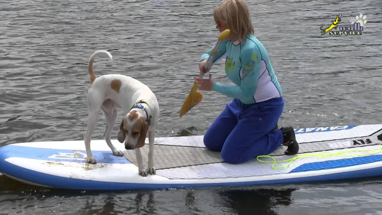 Как научить собаку плавать, дрессировка маленьких собачек, фитнес тренировка без допинга